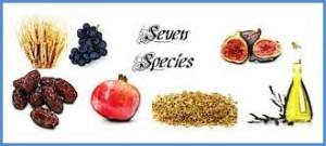 7-foods