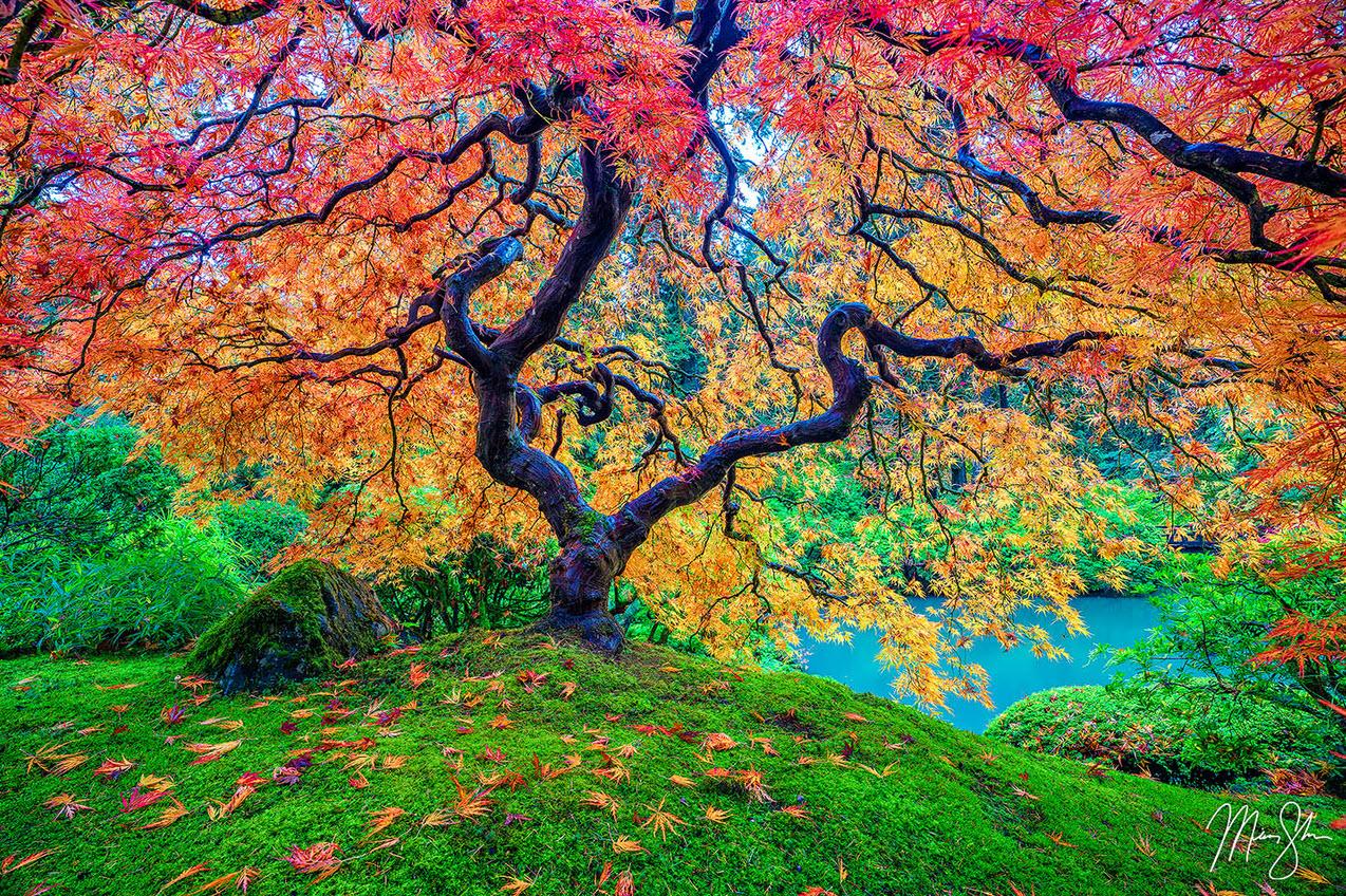 tree-of-life-portland-oregon